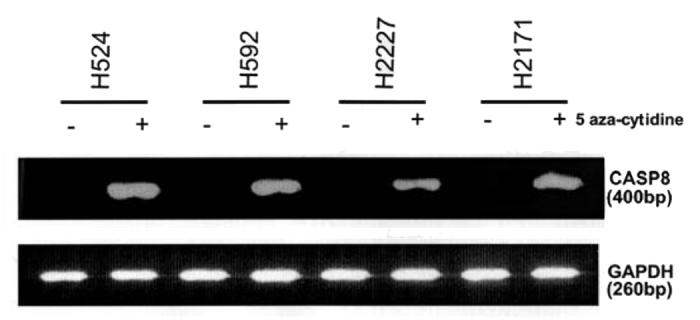 cbt.26923-F1.tif